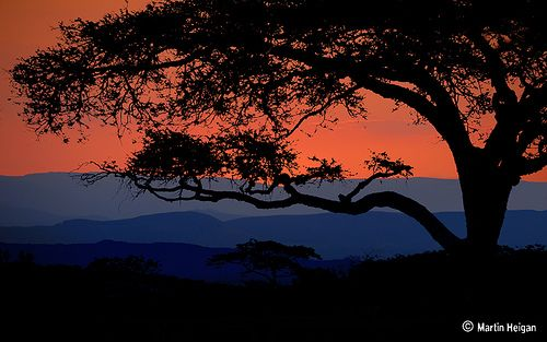 Bushveld Sunset,Nelspruit, Mpumalanga, South Africa (by Martin_Heigan)