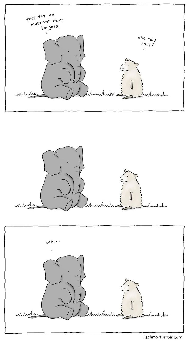 Elephants never forget ... Um