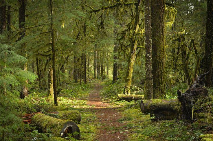 Pacific Crest Trail near Carson WA [OC] [30001994] #reddit