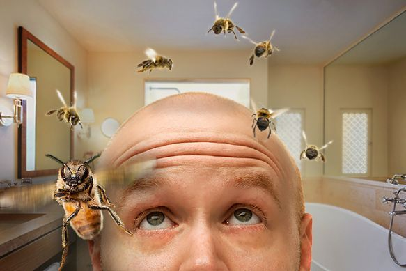 One More Reason to Save the Bees: They Might Keep You From Going Bald - Scientists discover that the insects' hives contain a material that promotes hair growth.