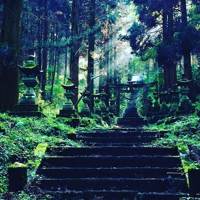 #japan #culture #traditional #scenery #shrine #sacredplace  Suddenly got sunlight into the dark ruined shrine thru cider woods. It was really sublime moment