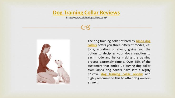 Are you searching for some positive dog training collar reviews to decide on the best training collar for your dog? If yes, you need not go any further than www.alphadogcollars.com. Offering dog training collars that have gathered rave dog training collar reviews from dog loving customers, these collars are custom made to ensure that training your dog is a safe, joyful and easy process for you.