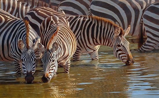 Cool reflections by Peter Stewart Oil ~ zebra painting