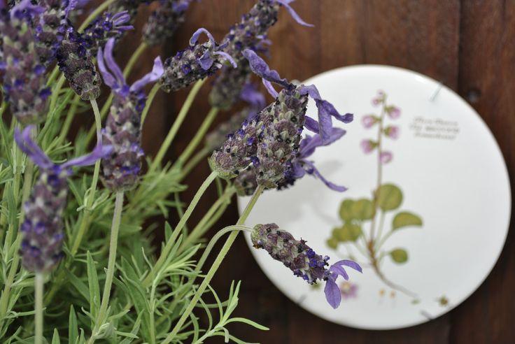 Lavendel, en af mine ynglings - Lavender, one of my favorite. http://lonnisverden.blogspot.dk/2015/08/mit-kreative-vrksted-i-haven.html