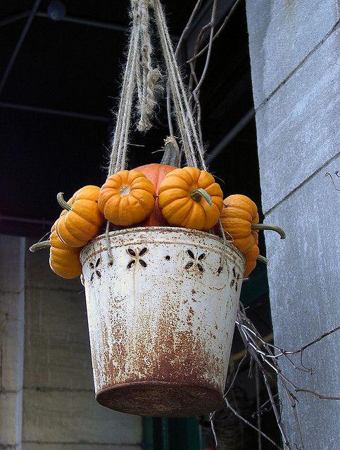 hanging bucket of pumpkins