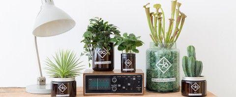 Waarom een echte man planten in huis heeft