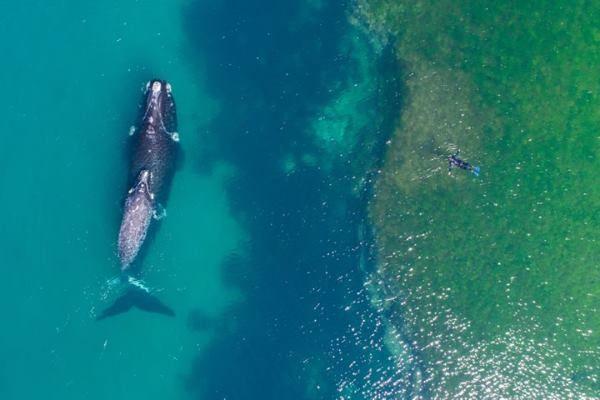 Nuotando con una balena