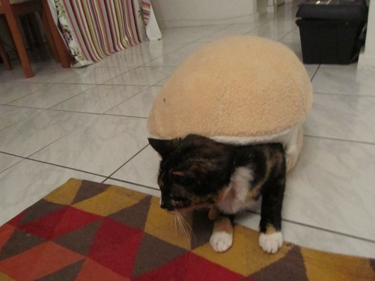 Cat burger 10