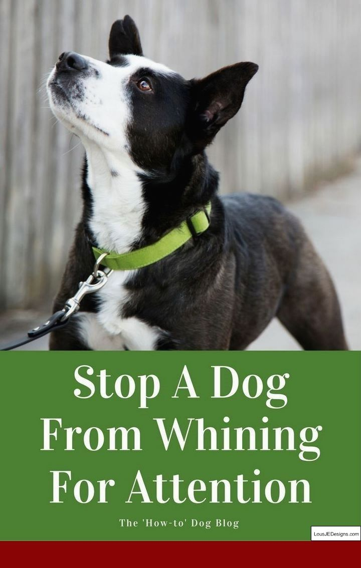 Dog Barking Deterrent Stops Dog Barking The Easy Way Dogs Dog