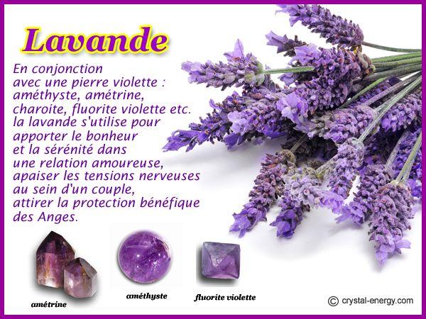 La lavande et les pierres violettes - Pierres Magiques