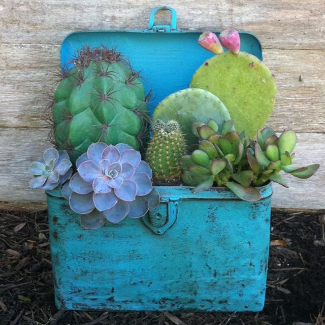 Vintage Box  Cactus/Succulent