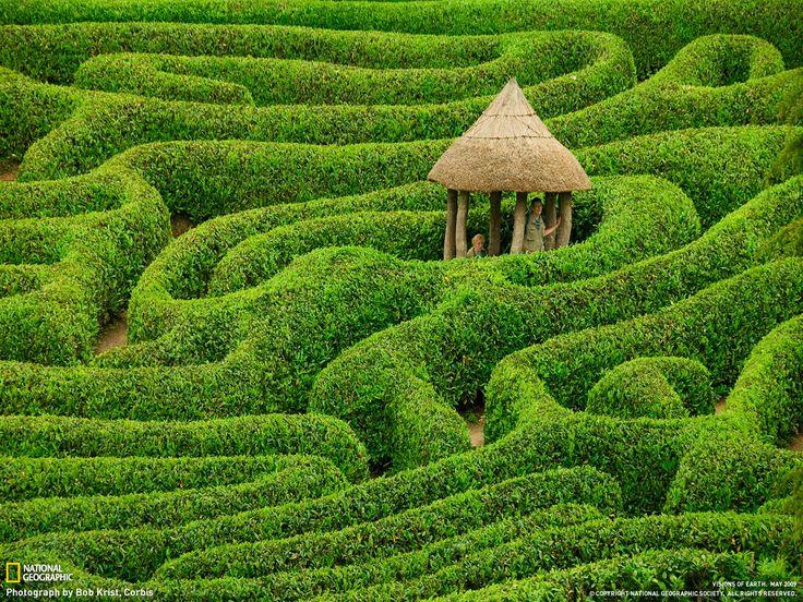 Laurel maze at Glendurgan Garden, Cornwall, England.
