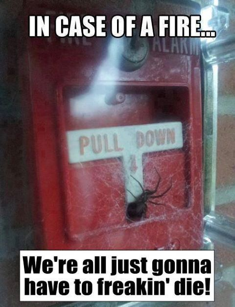 Why do spiders all ways end up in the most random places at the wrong times?