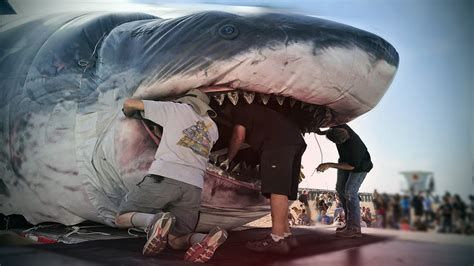 Image result for Megalodon Alive Today Caught On Camera