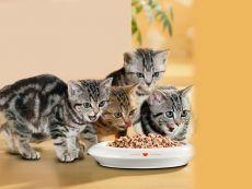 Самые опасные корма для собак и кошек