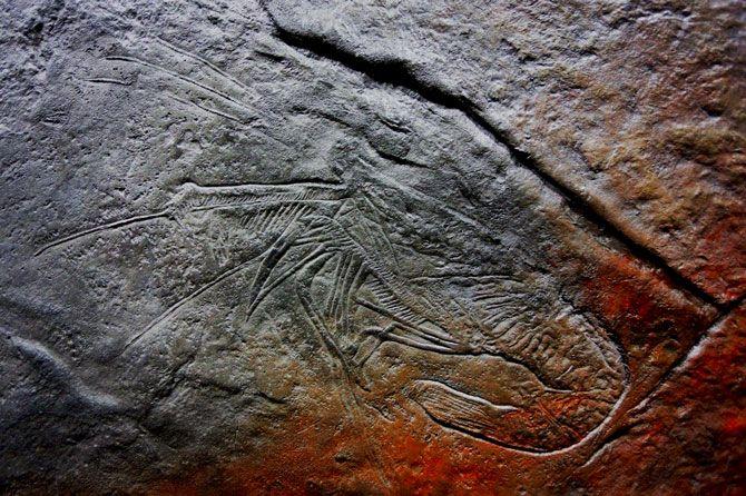 Odcisk skamieliny skała w betonie