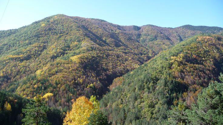 Un sector del espectacular bosque de Chate.