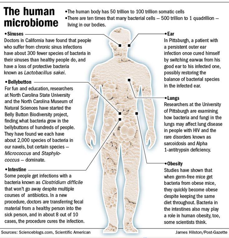 181 best microbiology and medicine images on Pinterest | Medicine ...