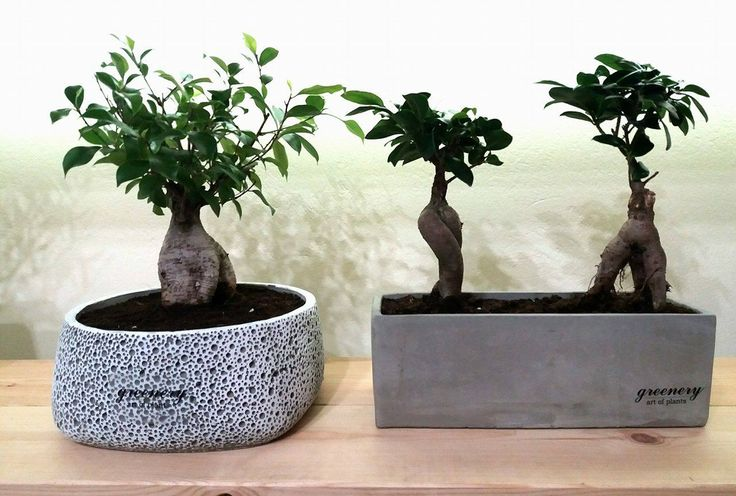 Bonsai in special pots #greenery #pots #planters #airplants #succulents #cactus #plants #chania #greece