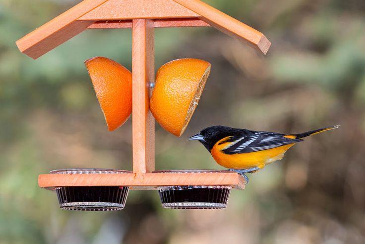 How to Make an Oriole Bird Feeder