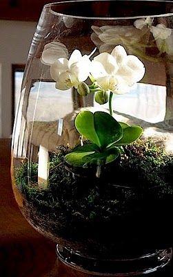 orchidea terrárium - How to make an orchid terrarium.  Very clean step by step.