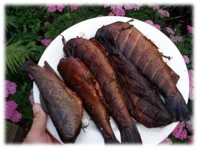 Smoking trout is typically a rare treat for fisherman. If you are lucky enough to be able to purchase trout from your local supermarket, try this recipe for a delicious treat that you will want to try time and time again.