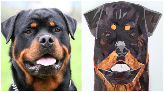 Rottweiler Portrait Mosaic from Pieces of Magazines, Dog Collage, Custom made, Framed