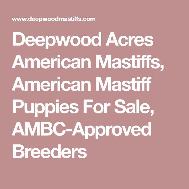 Deepwood Acres American Mastiffs, American Mastiff Puppies For Sale, AMBC-Approved Breeders