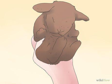 Care for Mini Lop Rabbits Step 9.jpg