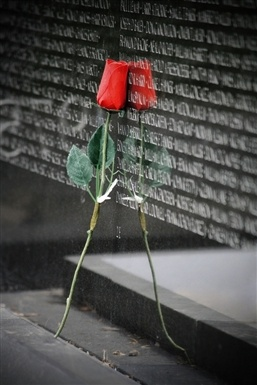 A Rose by the Vietnam Veterans Memorial