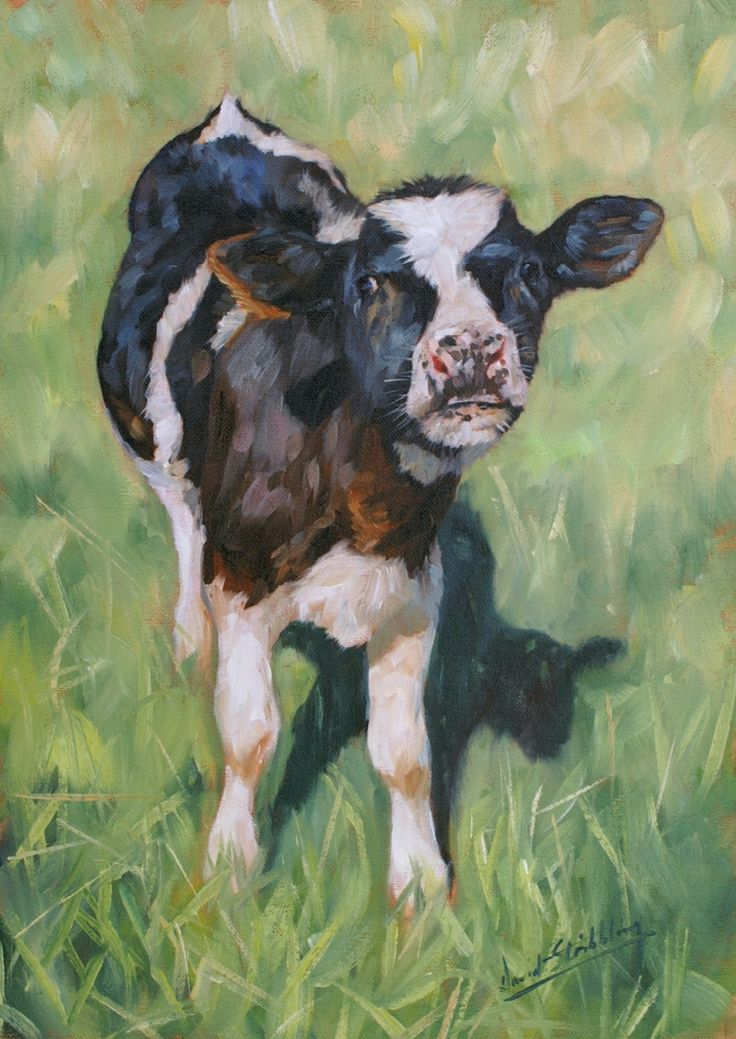 Holstein Calf Painting By David Stribbling Art Farm