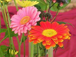 Afbeeldingsresultaat voor snijbloemen soorten