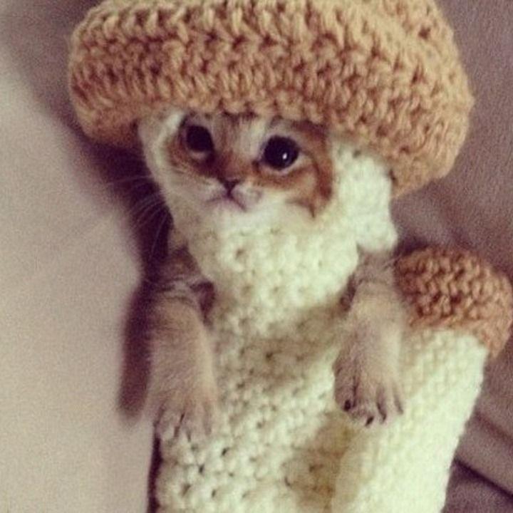 Crochet to the rescue! >> Injured Kitten Wears Mushroom Costume as Treatment