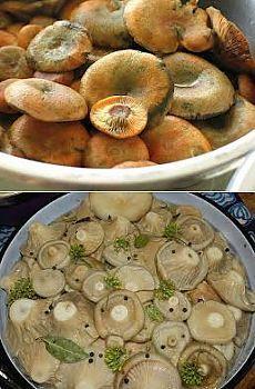 Бабушкины рецепты - соление грибов на зиму