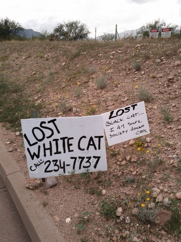 Missing feline and social commentary. | 22 Hilarious And Disturbing Missing Cat Posters