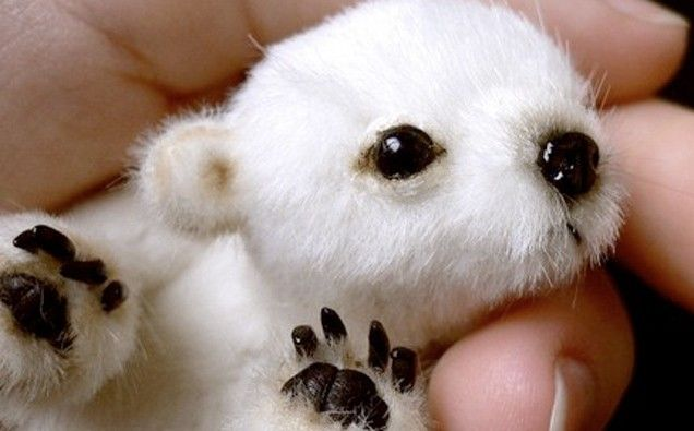 25 Images Of The Cutest Baby Animals On Earth