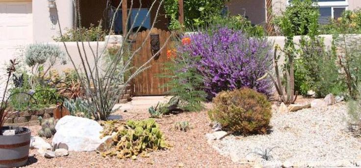 Landscaping And Outdoor Building , Desert Landscaping For Your Yard : Sunny Desert Landscaping