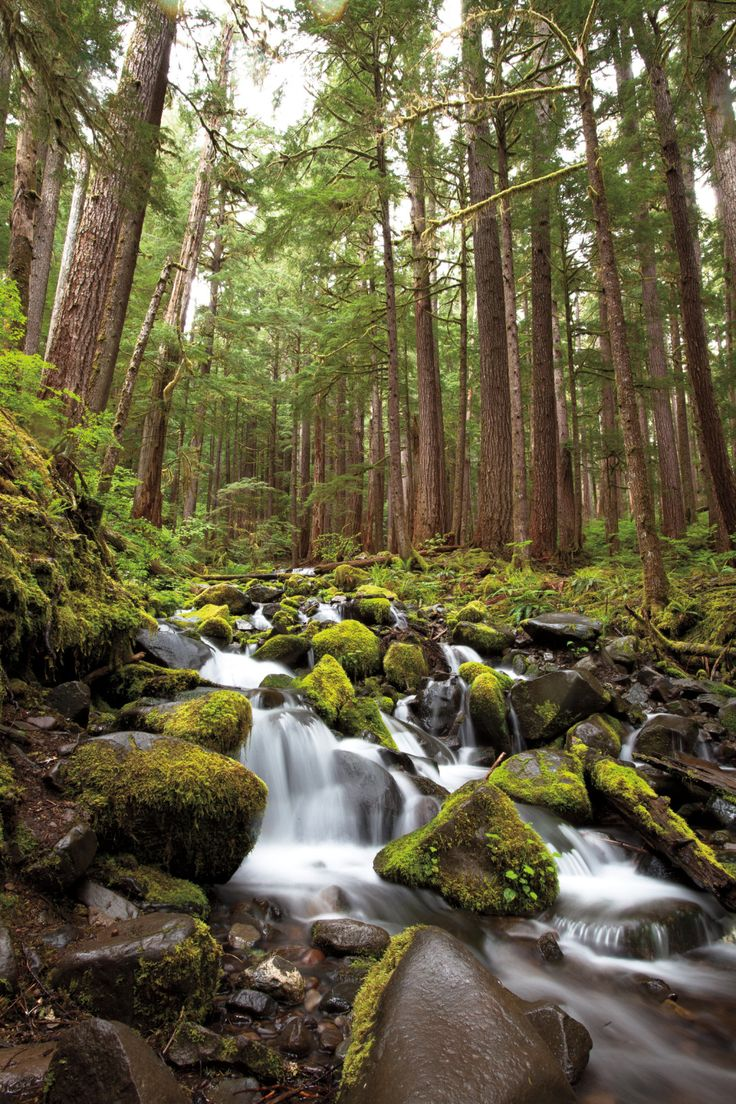 Insider's Guide to Olympic National Park: 10 Top Places to Visit in Olympic National Park | Seattle Met