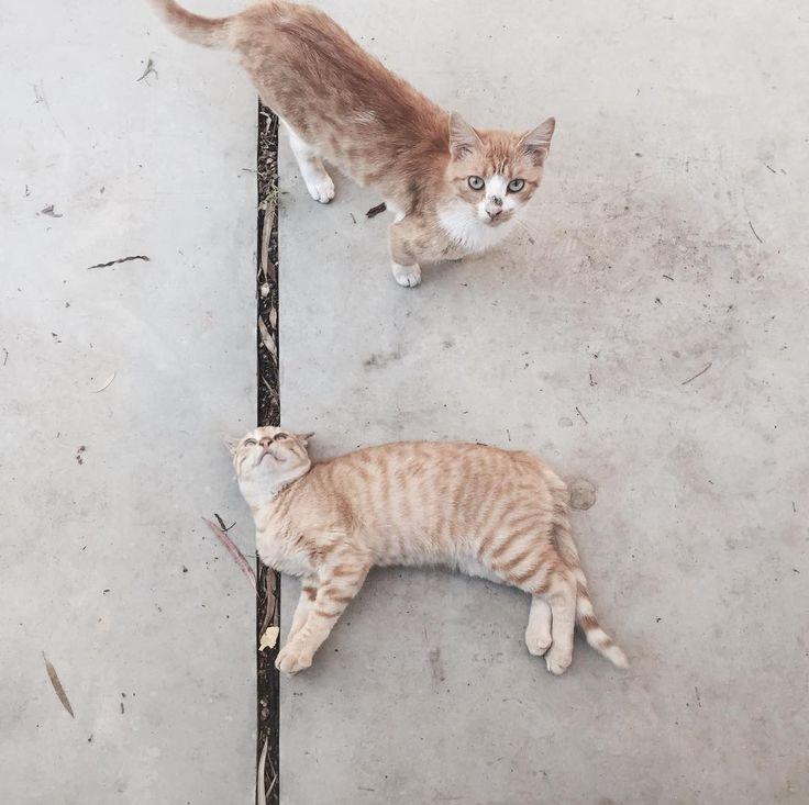 Μy new little #feline #friends