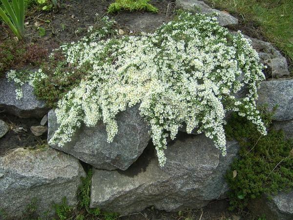 Цветы и камни: красивые сочетания, фотографии