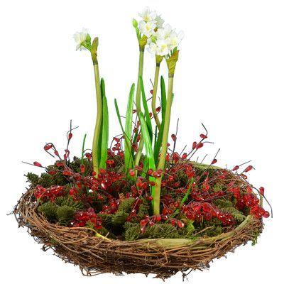Three Posts Narcissus Plant