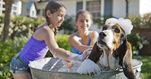 Petco | Abastecimiento para mascotas - Productos para mascotas - Alimento para mascotas