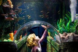 Coral Caves - Sea Life Melbourne Aquarium