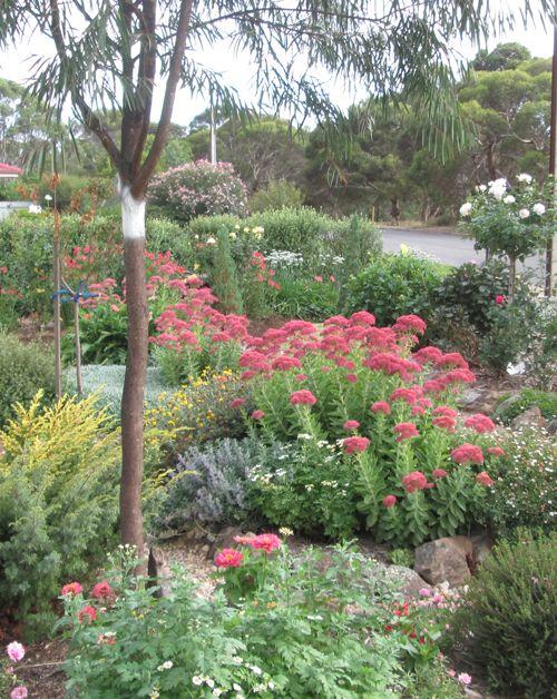 Open Gardens Australia - Dunedin garden features roses,sedums,bulbs and a dry stream garden. A kitchen garden produces seasonal vegetables espaliered fruit trees and stone fruit trees.