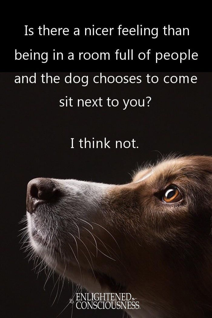 One Of The Best Feelings Dog Quotes Pets Animal Quotes