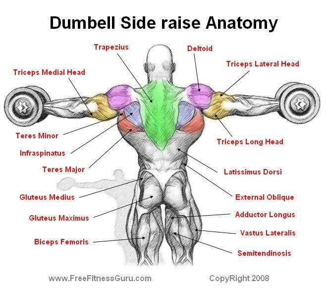 83 Best Bodybuilding Fitness Workout Charts Anatomy Images On
