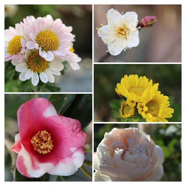 おはようございます 昨日は暖かかったのに 昨日はまた寒さ戻り… 春ー 遠慮しないで来ていいよ〜  お庭の小さな春たちです  #庭 #garden #花 #もと #もとl  #flowersfukudamotoko2017/01/31 10:02:03