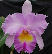 Resultado de imagen para orquídeas de venezuela