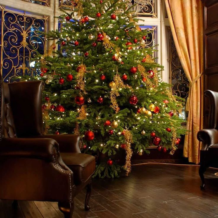 Best 25 Fraser Fir Christmas Tree Ideas On Pinterest Natural