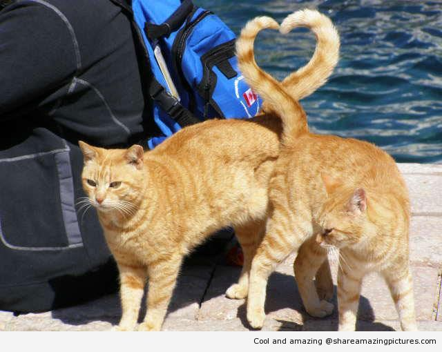 Cats heart shape with tail perfect timing | Share Amazing Pictures